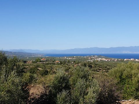 Parcel 5000 m2 with a building permit up to 200 m2 in one or two floors at Chrysokellaria Messinia, spot called Ampelia. This piece of land has a view of the Messinian Bay and mountain Taigetos. It forms an ideal choice for seekers of peace and quiet...