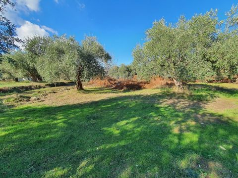 For sale a plot of land with total area of 1034 sq.m. in Skala Potamia of Thassos island. It is just 150 metres far away from the sea. Ιdeal for tourism business. The agency Thassos Realestate located in Thassos and specializes in real estate in Thas...