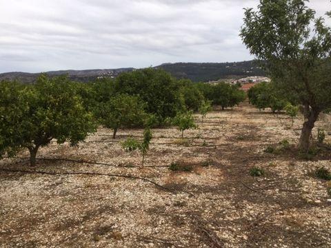 Terreno plano de 14.278m2 con plantado de naranjos en plena producción. El terreno tiene buen acceso y con agua de riego incluido. A 1,5km de Benidoleig.