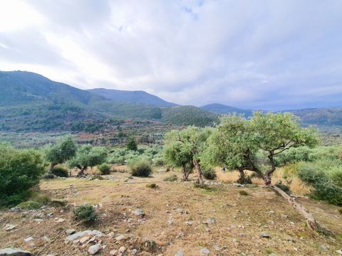 For sale a plot of land with total area of 12995sq.m.. The plot is located in Kazaviti of Thassos island in a green area. It is ideal for tourism business. The agency Thassos Realestate located in Thassos and specializes in real estate in Thassos Isl...