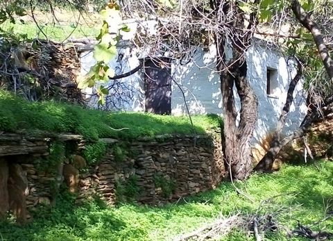 For sale a parcel of 8.000 sq.m. in the area K Ipsilou in Andros, buildable, near a rural road. It is fenced and has 2 water sources, 2 tanks, lemon trees, oranges, walnuts, olives, muslims, plums and a stone storage room with a fireplace of about 20...