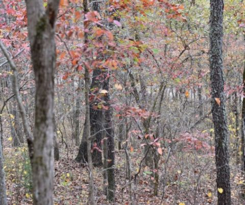 Located in Fordland. Check out this stunning 8.4ac parcel of land in the highly desirable area of Martins Branch Rd Fordland near Springfield. 8.4ac offers plenty of space for your gardens, animals and your beautiful home or cabin. Beautiful trees al...